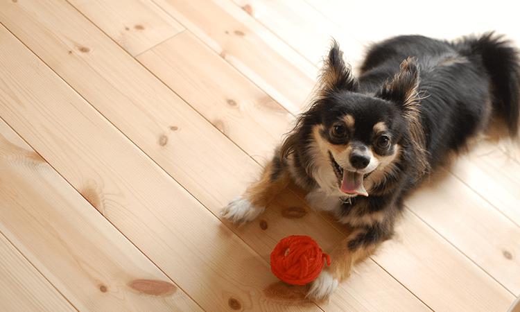 大鹿厚子ブリーダーの取扱い犬種について