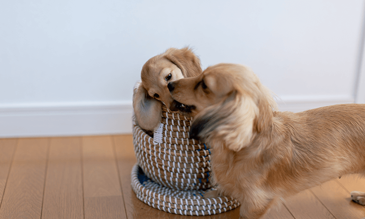 子犬の飼育について