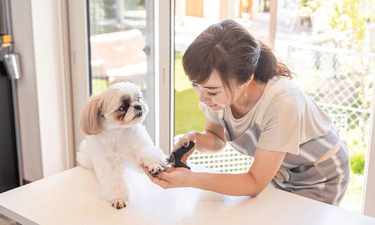 犬猫用ペットホテル・トリミング・ドッグスパを完備