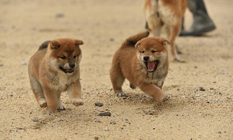 犬種の特徴
